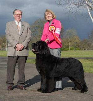 Photograph of the Best In Show winner, Shalowseas Spin Doctor