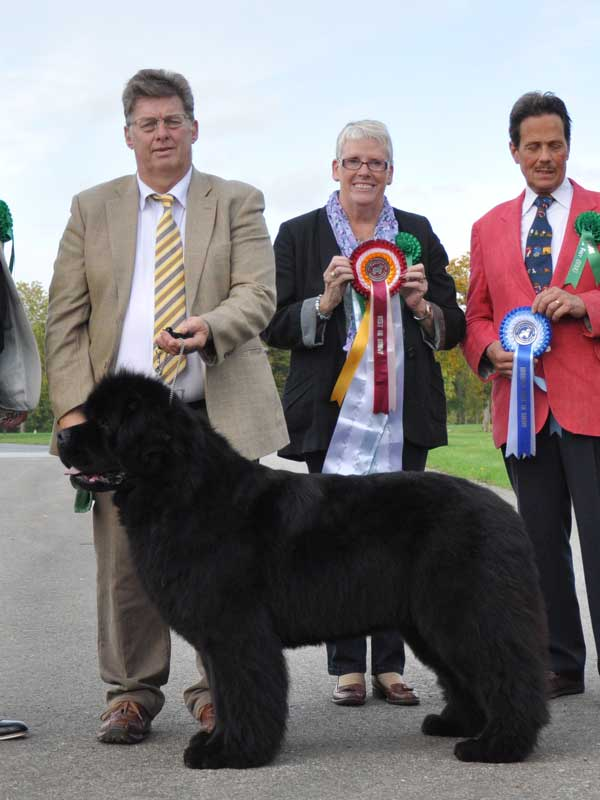 Photograph of the Best In Show winner, Ch., Ir. Ch. Brooklynbear Picasso