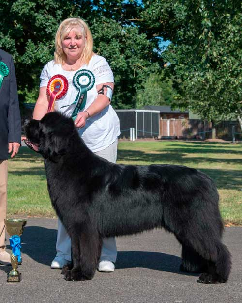 Photograph of the Best In Show winner, Merrybear D'Artagnan with Lyn Chapman