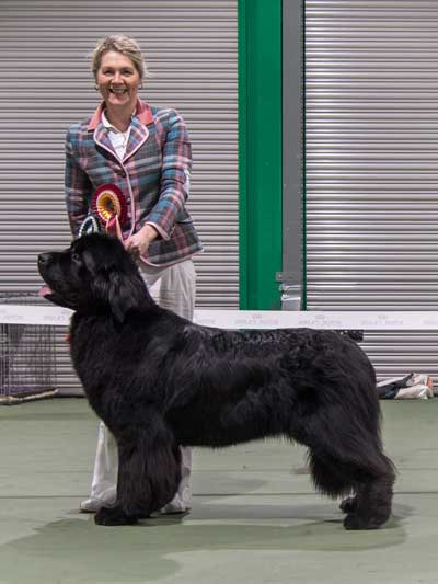 Photo of the Best In Show from the October 2016 Open Show