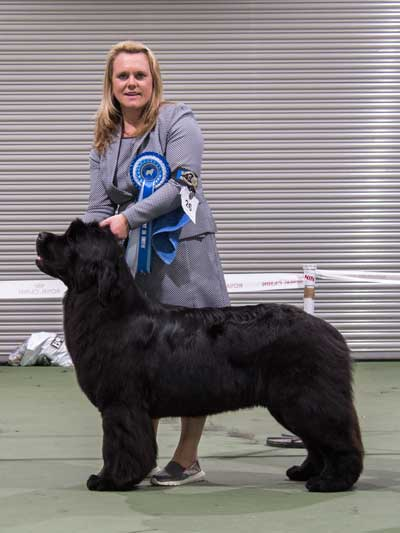 Photo of the Best Opposite Sex In Show from the October 2016 Open Show