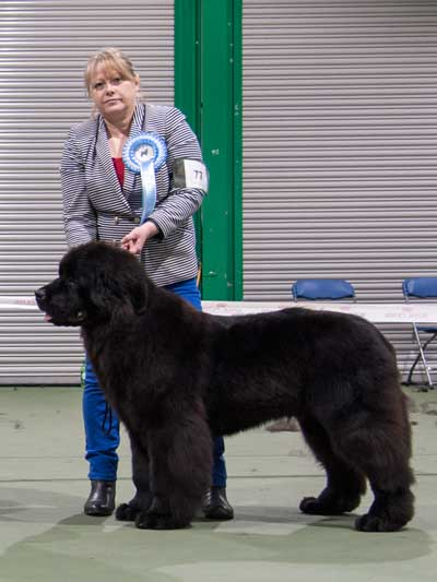 Photo of the Best Puppy In Show from the October 2016 Open Show
