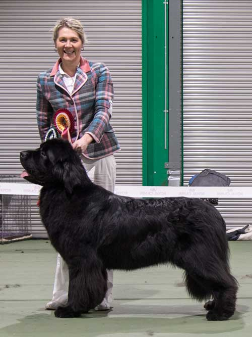 Photograph of the Best In Show winner, Merrybear D'Artagnan