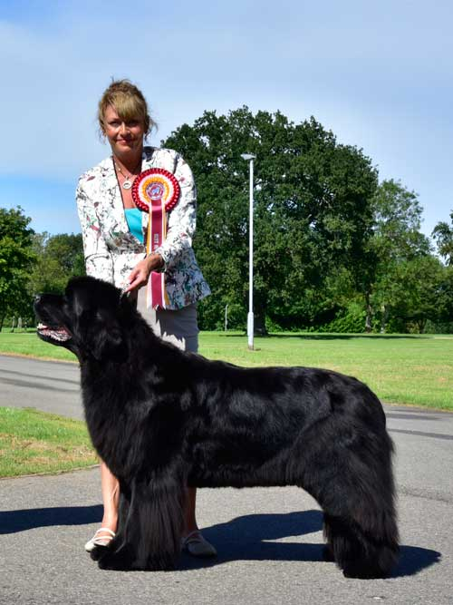 Photograph of the Best In Show winner, Ch. Darkpeak Fallen Angel