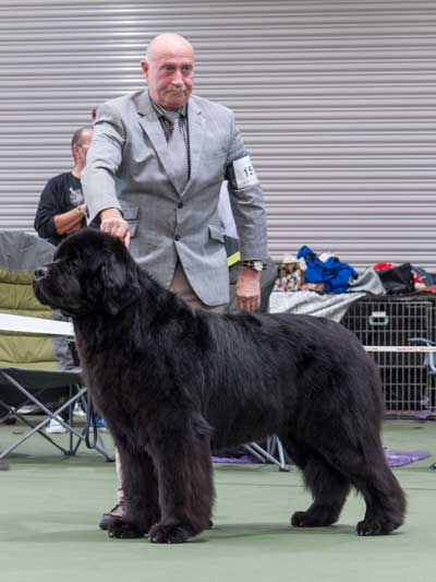 Photo of the Best In Show from the 21 October 2017 Championship Show