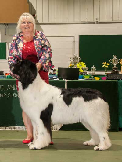 Photo of the Best Opposite Sex In Show from the 21 October 2017 Championship Show