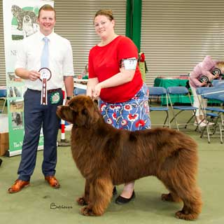Best Brown In Show from the 4 August 2018 Open Show