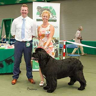 Best Veteran In Show from the 4 August 2018 Open Show
