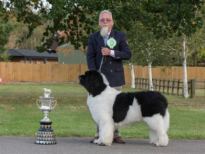 Best White and Black In Show at the 13 October 2018 Newfoundland Club Championship Show