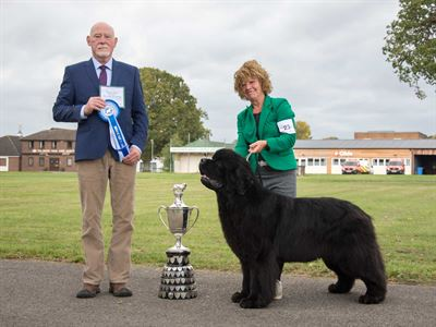 Reserve Best In Show at the 13 October 2018 Newfoundland Club Championship Show