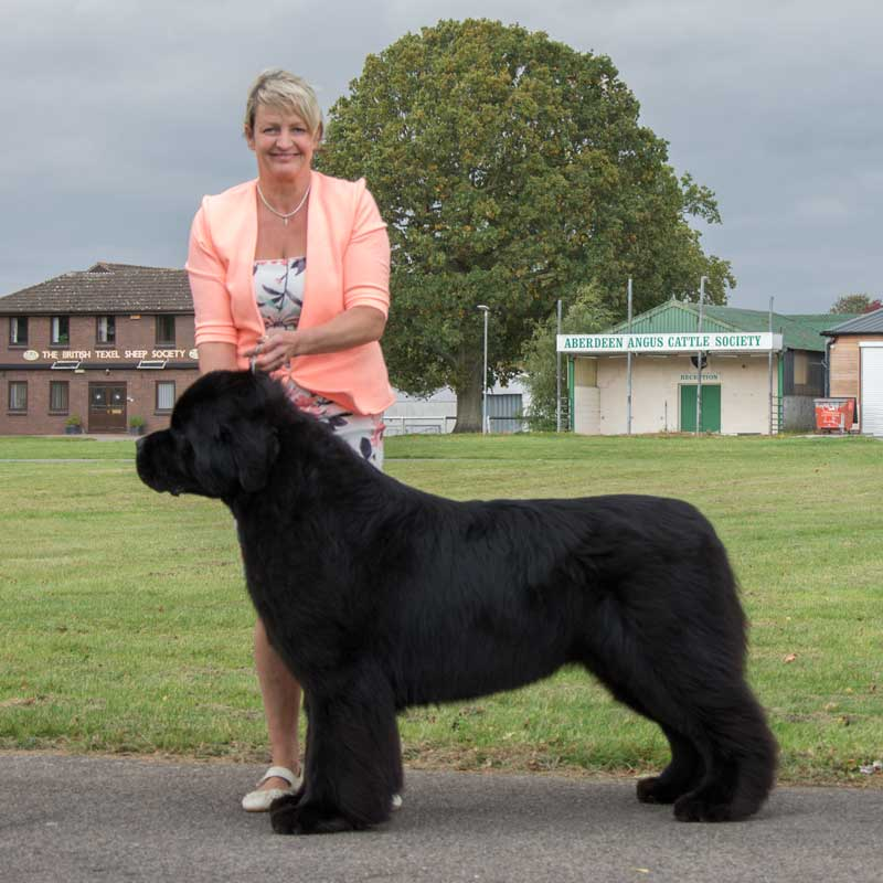 Photograph of the Best In Show winner, Ch. & Am. Ch. Mainland Anchorbay Now I Know My ABC's