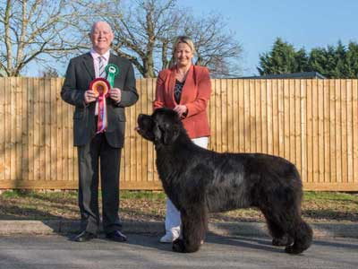 Best In Show at the 23 February 2019 Newfoundland Club Open Show