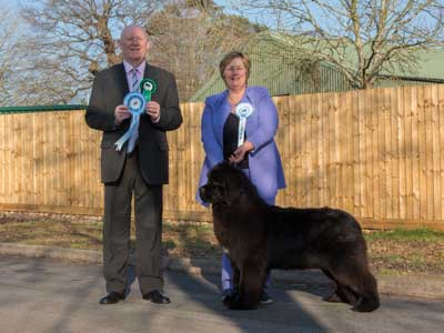 Best Puppy In Show at the 23 February 2019 Newfoundland Club Open Show