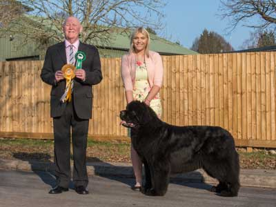 Best Veteran In Show at the 23 February 2019 Newfoundland Club Open Show