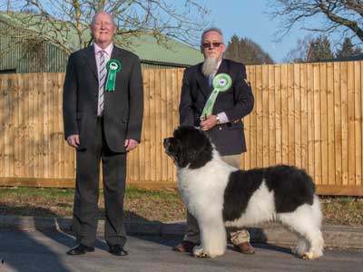 Best White and Black In Show at the 23 February 2019 Newfoundland Club Open Show