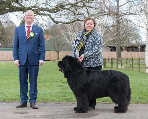 Best Veteran In Show at the 29 February 2020 Newfoundland Club Open Show
