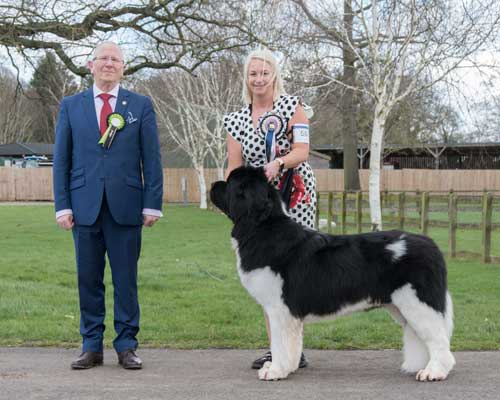 Best White & Black In Show at the 29 February 2020 Newfoundland Club Open Show
