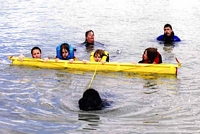 Photograph of a Black Newfoundland towing a beam with several people