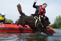 Photograph of a Newfoundland dog jumping from a boat into the water on command