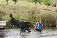 Photograph of a Black Newfoundland leaping into a lake from a jetty