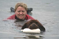 Photograph of a Brown Newfoundland towing his owner to shore