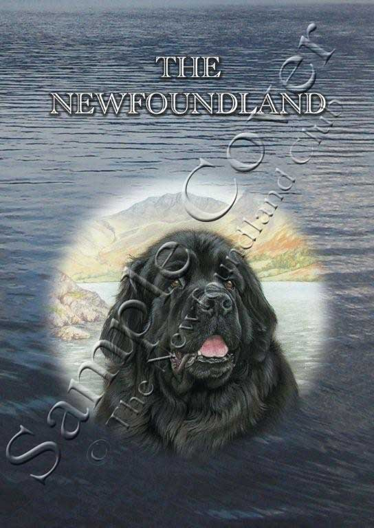 Cover photo of The Newfoundland book